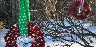 Holiday ornaments for the birds.