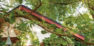 A garden shed with creamy stucco and red shingles is covered in lush, green ivy.