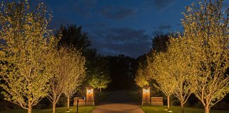 A walkway lined with trees and lights lit up at night by Erickson Outdoor Lighting.