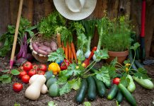 vegetables and greens in the garden