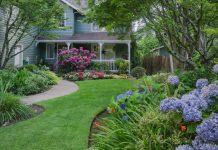 hydrangea garden in front yard
