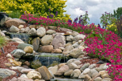 Beautiful rock garden with waterfall and pink flowers.